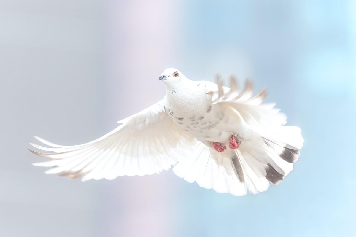 Heiliger Geist = höherer Bewusstseinszustand = Christusbewusstsein?