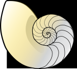 shell-776179_1280